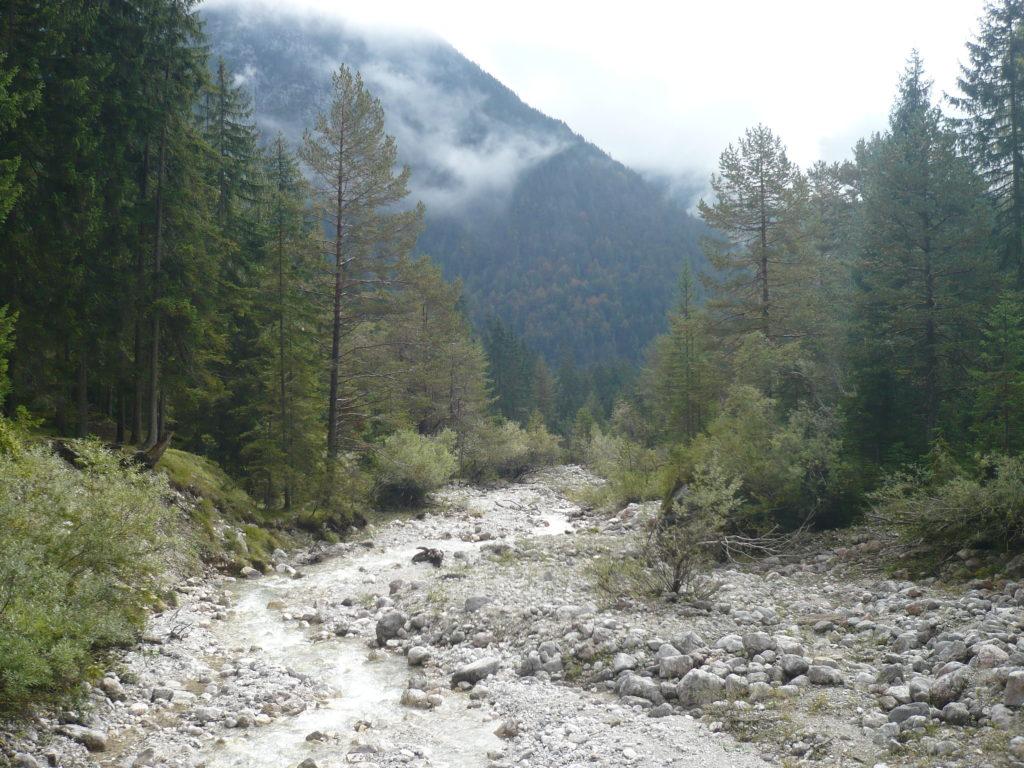 Waldweg Leutasch